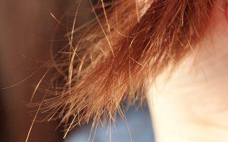 Сухое масло для волос dove преображающий уход