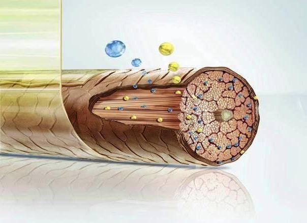 Молекулярное восстановление волос на молекулярном уровне